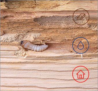 protector belgium - houtbescherming-brussel